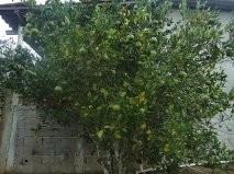 Ibiuna Chacara 1.000 Ms Casa,lus E Poço