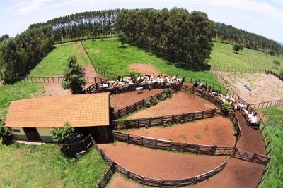 Fazenda A Venda Com 453 Alqueirões Em Jataí - Go