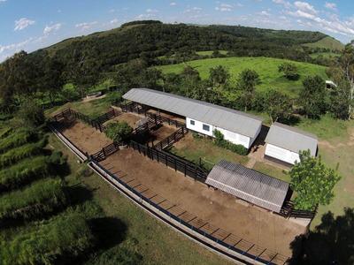 Fazenda De Gado Nelore E Café Com 320ha No Sul De Mg