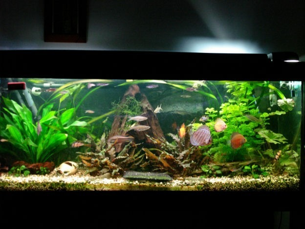 decoracao para jardins mercado livre:25kg cascalho de rio para aquário, jardins, decoração, peixe
