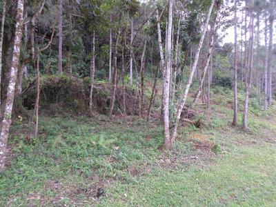 Terreno-juquitiba-20.000 Mts2-bosque-só R$.60.000 Ref: 03855