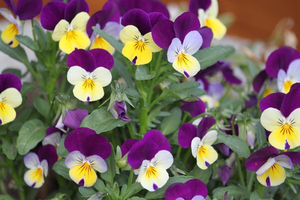 Resultado de imagem para flores e amores