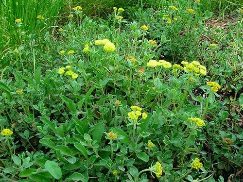 flores para jardim mercado livre ? Doitri.com